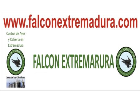 FALCON EXTREMADURA