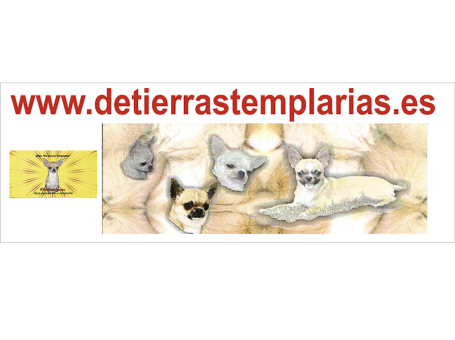 CHIHUAHUA DE TIERRAS TEMPLARIAS